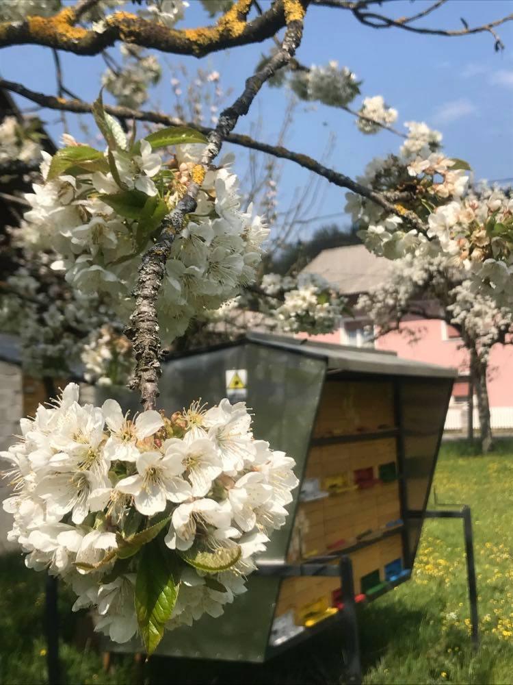 Beekeeping Intihar